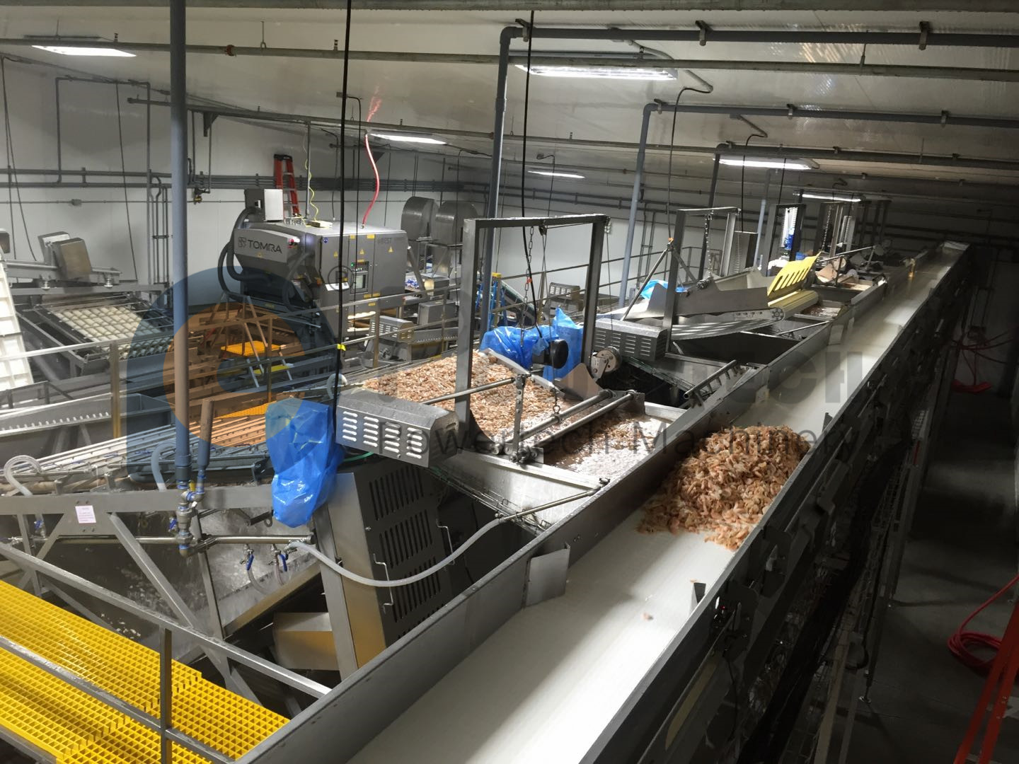 High Capacity Sea Caught Shrimp Automatic Peeling Production Line