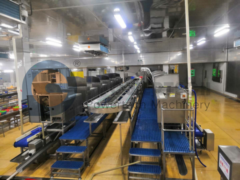 Automatic High Capacity Crayfish Processing Line